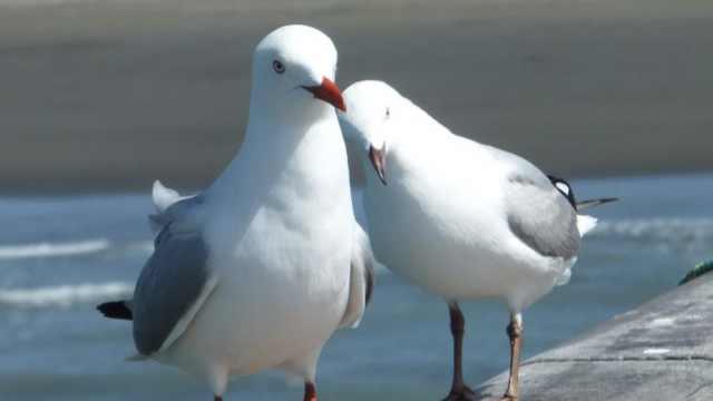 河南大爷分享动物有爱瞬间:让它们也享受七夕节浪漫