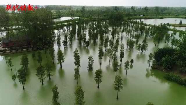 """南京有一处""""世外桃源"""",湿地释放生态红利"""
