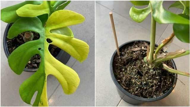 一个盆栽拍出3.7万元,创下新西兰拍卖网站纪录