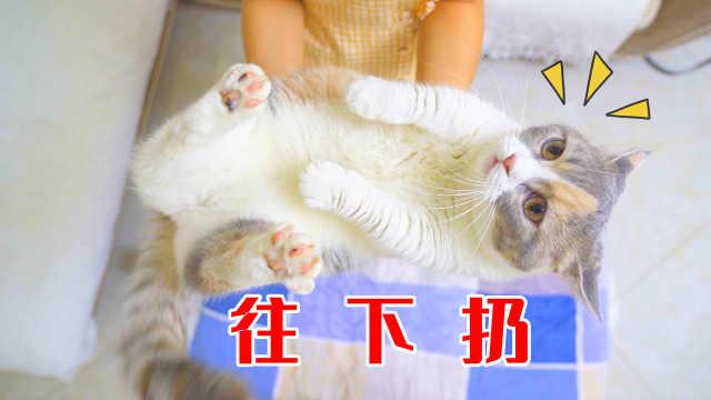把猫从高处往下扔,一定是4脚落地?猫:糟糕!