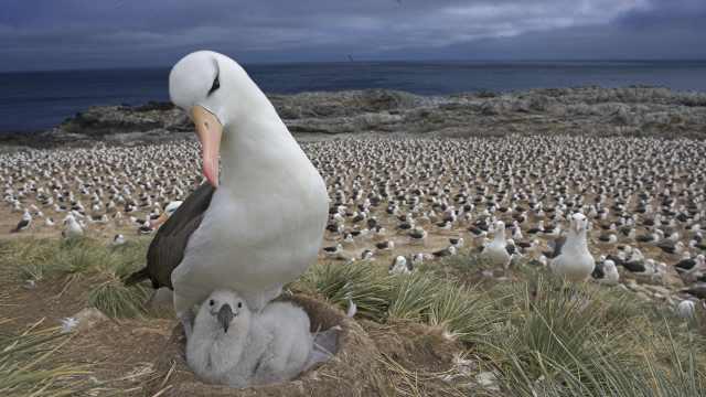 WWF重磅报告:地球野生物种群数量50年来平均减少三分之二