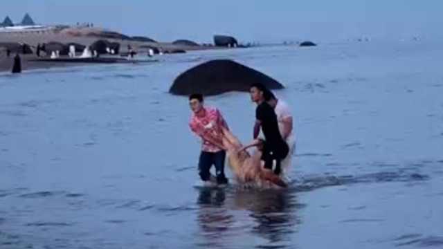 女子情绪激动冲进大海轻生,休假消防员追下海救回