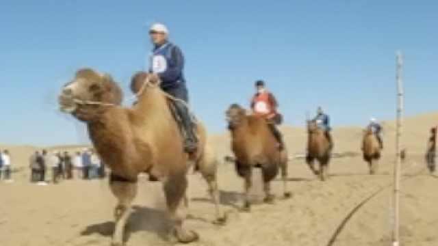 54岁阿姨夺内蒙古5000米骆驼圈赛冠军:比赛时顺便玩一玩
