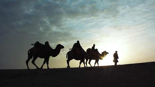 敦煌鸣沙山牵驼人:旺季日行67公里,游客让我长见识