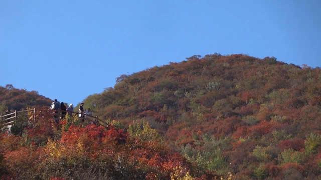 早知坡峰岭,何必去香山!北京周口店·幽岚山第九届红叶节开幕