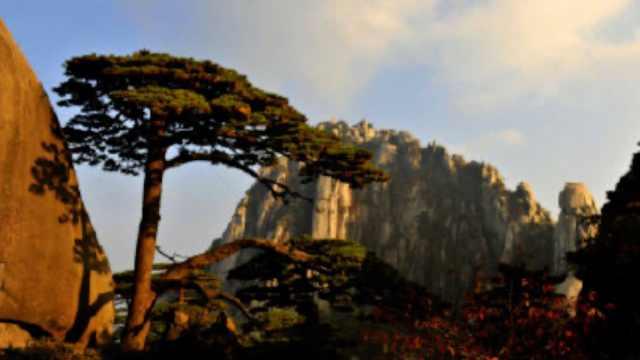黄山风景区辟谣迎客松为塑料树:网传不实,有守松人专职护理