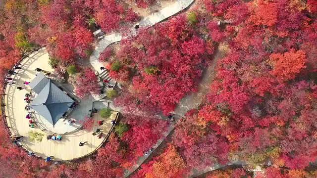 真▪风景如画!航拍京郊坡峰岭漫山红叶层林尽染