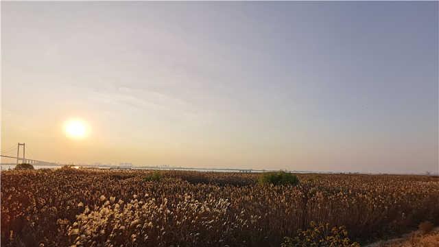 """空间""""留白""""、尾水涵养,江苏泰州这些滨江岸线美成画"""