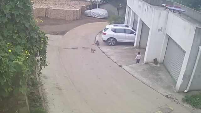 男童车库门口摔倒,遭出库车辆碾过不幸身亡
