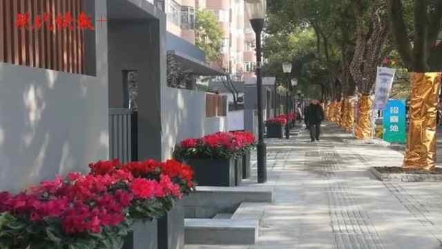 南京又添新网红街区,百家湖湖滨路•绿荫下开街