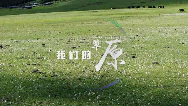 云南生物多样性保护宣传片《我们的草原》