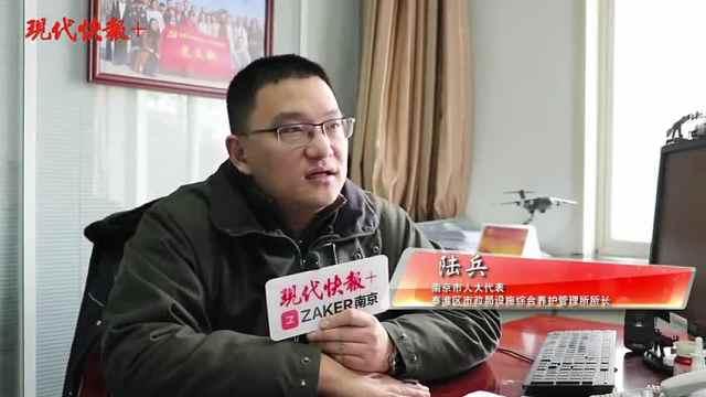 """每年50元,南京市人大代表建议:给法桐行道树涨""""生活费"""""""