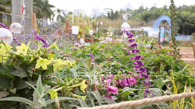 冬日里的深圳花景,美到你了吗?