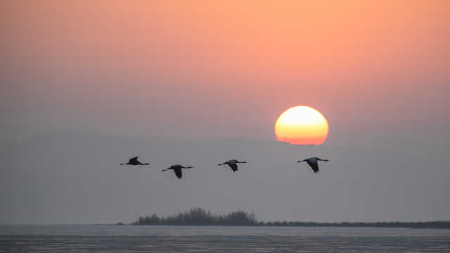 翩跹起舞!贵州威宁草海迎来大批越冬黑颈鹤