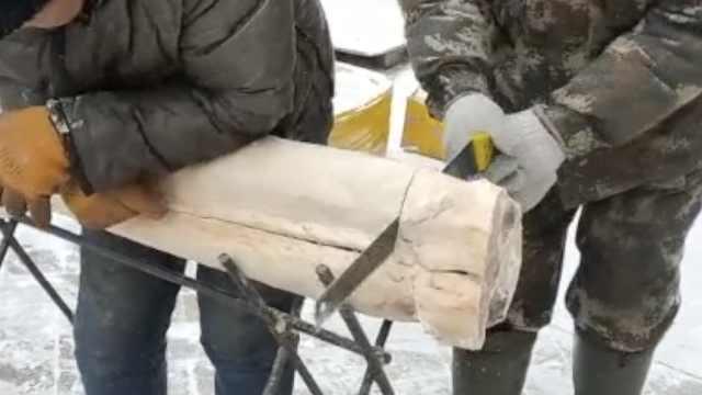 """在东北卖鱼要干木匠活!鲟鳇鱼冻成""""木头""""商贩用锯子切着卖"""