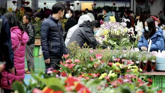 春节前去哪买花?到亚洲最大鲜花市场逛逛