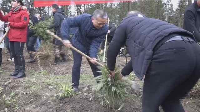 节后上班第一天,党员干部植树忙