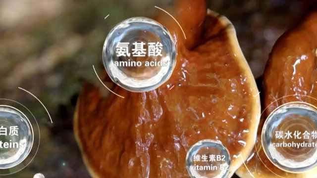 可食用蘑菇共2189种!云南专家发布全球野生食用蘑菇科学清单