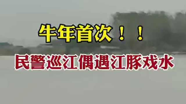 牛年首次!民警巡江偶遇江豚戏水