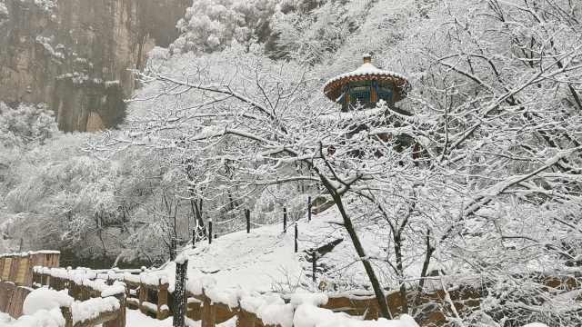 秦岭最高峰迎春雪,林间添诗意秒变水墨画
