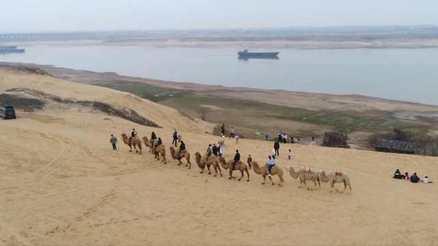 江南没有大沙漠?看这里,游客骑骆驼列队行进