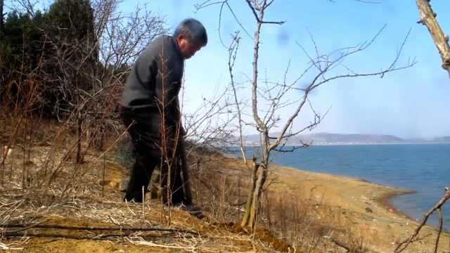 65岁老汉点蜡烛37年孤岛造林:怕影响声带和水对话