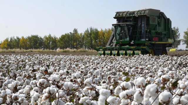 棉花的花是什么花?从一粒种子到棉织品,看棉花的一生