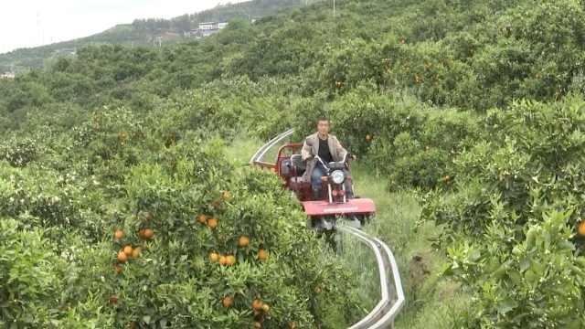 重庆果农山里建轨道,每天坐过山车采摘橙子