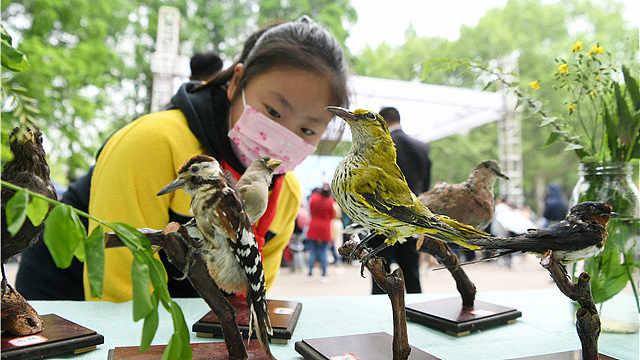 """今年南京""""爱鸟周""""活动别错过!"""