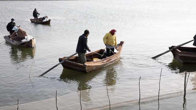 东北养殖户给海蜇苗转场,手摇木船人工分辨大小