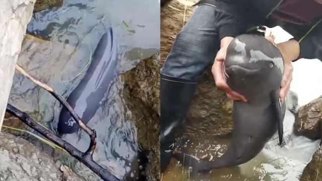 江豚幼崽搁浅岩缝,直到等来了他们