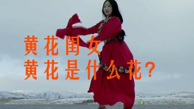 黄花闺女:这个黄花究竟是什么花?为何用来形容未婚女子?