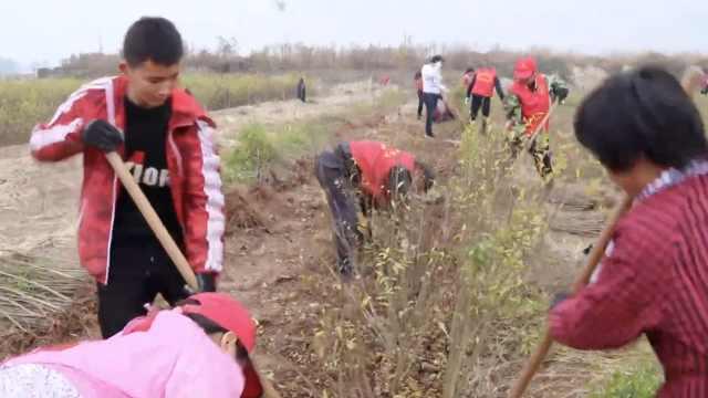 农妇率领自愿者承包种地供养8村老幼:男女老少都加入