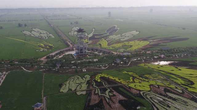 在1550亩稻田上画画是什么体验?有9种颜色可用,需卫星定位