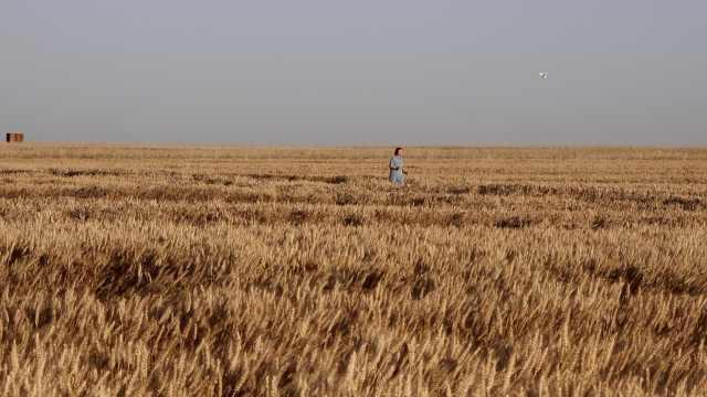 风吹麦浪!秦岭脚下万亩小麦成金色海洋,随手一拍就是大片