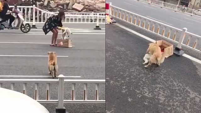 狗狗被车撞死,同伴脚踩嘴拱拼命唤醒,网友:摇一次心疼一次