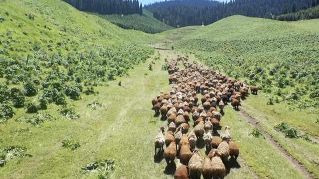 航拍新疆68万头牲畜大转场!一路风景如画像穿越世外桃源