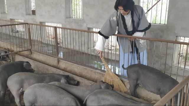 小伙穿汉服养猪:汉服是兴趣,养猪是生活