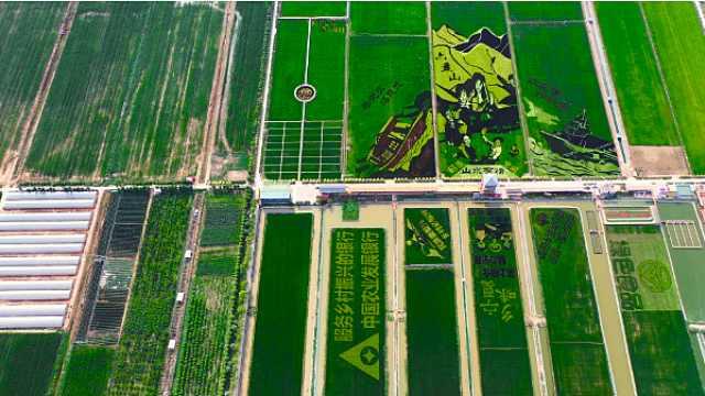 宁夏银川稻渔空间:不是江南胜江南