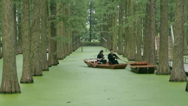 船在林中走,人在画中游!扬州这片水上森林宛如绿色童话世界