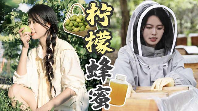 夏日美白必喝柠檬水做法,蜂场采蜜 +狂摘30斤柠檬