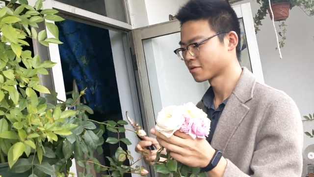 男生把宿舍阳台种成花园:若有女友,每天送她花