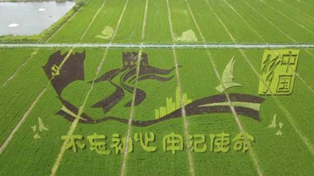 """壮观!苏州现400亩巨型""""稻田画"""",村民用6种颜色水稻种成"""