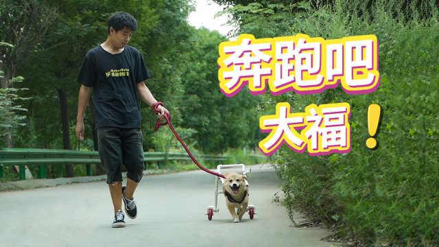 给瘫痪的狗狗做了一个轮椅,它终于可以快乐的奔跑了
