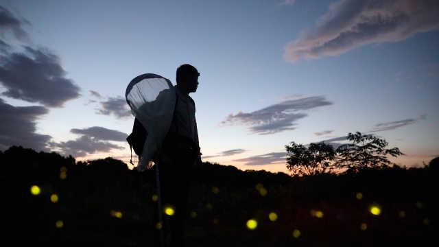田野实验室 华农教授研究萤火虫21年,建立中国萤火虫分类框架