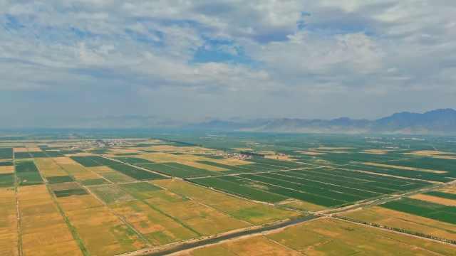 风吹麦浪!内蒙古河套大地76万亩小麦丰收,平均亩产上千斤
