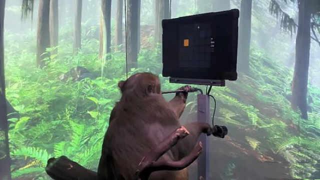 猴子也能玩电子游戏,脑机接口黑科技成了!
