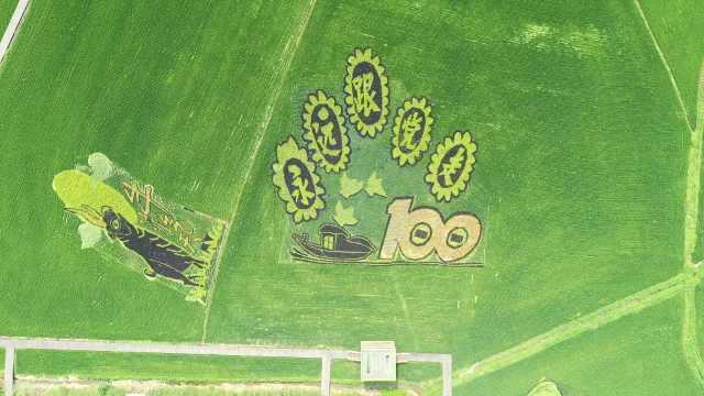 东北这村村民自己种稻田画,5年5个不同主题,到季照样收割