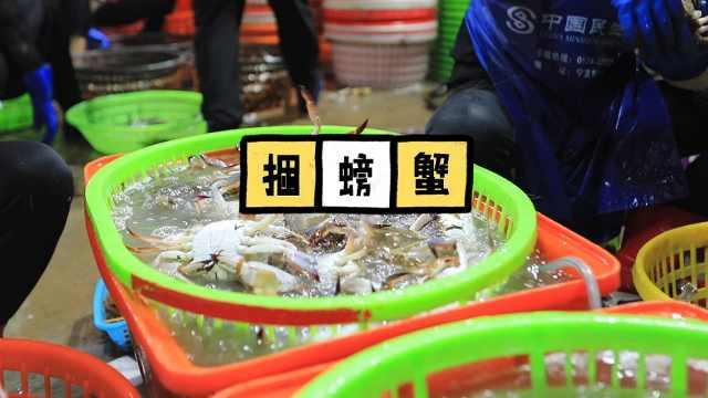 梭子蟹大卖~记者来到码头体验捆螃蟹~