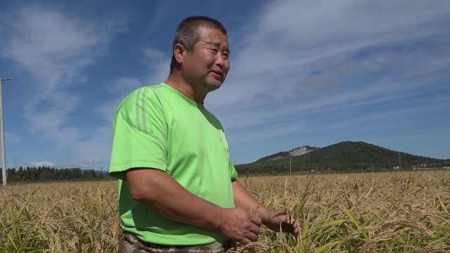 东北农场工坚持种水稻15年:不敢想已有车有房,被打工者羡慕